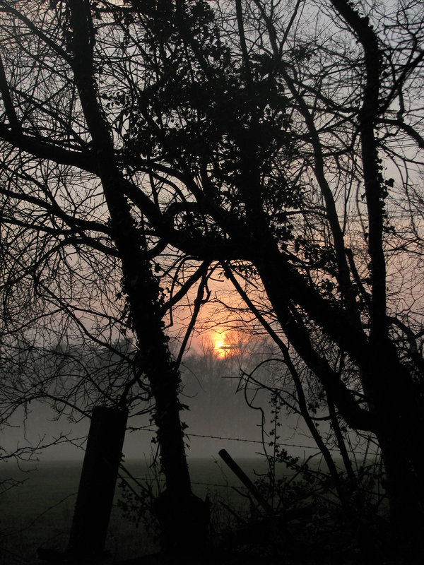foggy sunset