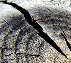 I need a break... (michaelab311) Tags: wood macro table lunch moving  break riss dof cut packing change newhome goodbye pause makro tisch holz vernderung aurevoir seeyou solong changement sortingout lackoftime michaelab311 michaelab