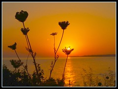 sunset in the flower (maios) Tags: light sunset sea summer sky sun flower colour reflection beach nature water beautiful yellow composition greek photo eva europa europe flickr photographer notes hellas olympus loveit explore greece macedonia thessaloniki fotografia soe salonica thermaikos halkidiki manikis maios iosif horison  heliography    mywinners abigfave   platinumphoto impressedbeauty  ysplix sozopoli  natureselegantshots   alwayscomment5    evamathemat imagescollectors    iosifmanikis     artistoftheyearlevel3 artistoftheyearlevel4 artistoftheyearlevel5