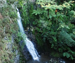 Paranui Falls (Mairtown, Auckland, New Zealand) Photo