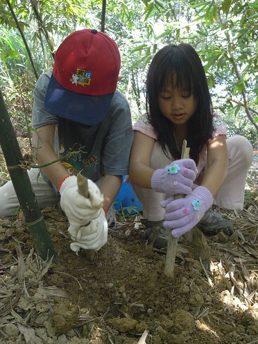 你拍攝的 39兄妹努力挖竹筍。