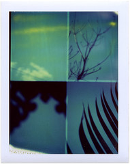 (Kat White) Tags: film polaroid glebe 669 frommybalcony winterblues miniportrait402