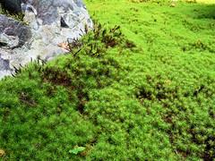Sea of moss