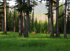Flathead National Forest (2) - Montana