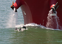 At Play... (OneEighteen) Tags: port harbor marine ship 500v20f play houston maritime dolphins nautical pilot houstonshipchannel