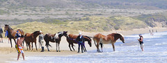 skimmers and riders co-exist (tibchris) Tags: horses horse cheval nikon waves pointreyes equine splashing limantourbeach d700 tibchris froliking arcticpuppy snapchris wwwsnapchriscom