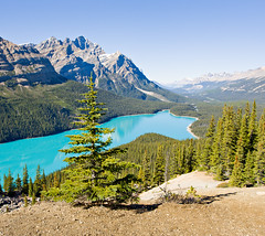 Peyto Lake (mahonyweb) Tags: travel mountain lake holiday canada interestingness interesting explore alberta jaspernationalpark continentaldivide lightroom banffnationalpark peytolake icefieldsparkway canadianrockies canon1740l top500 flickrexplore highway93 rockflour magicdonkey promenadedesglaciers caldronpeak mountjimmysimpson peytopeak canoneos1dsmarkiii waputikrange canon1dsmarkiii ebenezerwilliampeyto