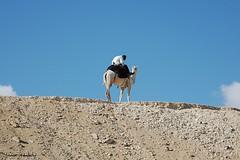 SSS!!!!!!!! (Simone Martis - 4morixeddu) Tags: relax sand blu comunicazione cairo egitto globale lifebeautiful estremità 4morixeddu