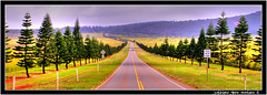 Road to Lanai City from Manele Bay Maui County Hawaii (j glenn montano 3) Tags: from road county city trees pine four hawaii bay seasons glenn cook maui lodge montano lanai koele manele justiniano colourartaward