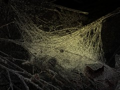 Wet Spiderweb (deepintheforestcat) Tags: tree fall leaves spiderweb spooky cobweb raindrops gothicculture freespiderwebtexture
