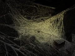 Wet Spiderweb (deepintheforestcat) Tags: tree fall leaves spiderweb spooky cobweb raindrops gothicculture freespiderwebtexture