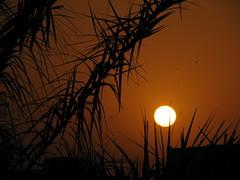 IMG_4914 (Hathal Samir) Tags: sunset orange birds gold iraq balck palmtree basra passionphotography