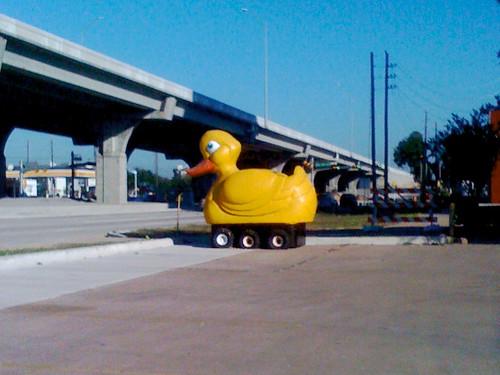 Duck Roll Closeup