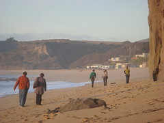 MartinsBeach_2007-232 (Martins Beach, California, United States) Photo