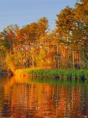Swamp Shimmer (ecco9494) Tags: trees color reflection water neworleans vivid explore swamp jol shimmer honeyislandswamp mywinners abigfave sognidreams guasdivinas