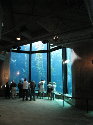 Kelp Forest Monterey Bay Aquarium