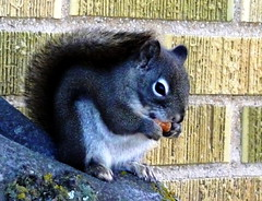 squirrely side
