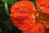 Doccia (FedericaPC) Tags: flower macro water canon waterdrops fiore rosso goccia gocce macrofotografia goccioline goldstaraward federicapc