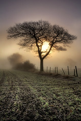 Tree (Chris Charlesworth) Tags: soe breathtaking blueribbonwinner omot colorphotoaward superaplus flickrdiamond megashot amazingamateur theunforgettablepictures overtheexcellence platinumheartaward nikond300 thesecretlifeoftrees goldstaraward alemdagqualityonlyclub breathtakinggoldaward nikonflickraward 100commentgroup vosplusbellesphotos dragondaggeraward chrischarlesworthportfolio iamnikon aboveandbeyondlevel1 aboveandbeyondlevel2 aboveandbeyondlevel3