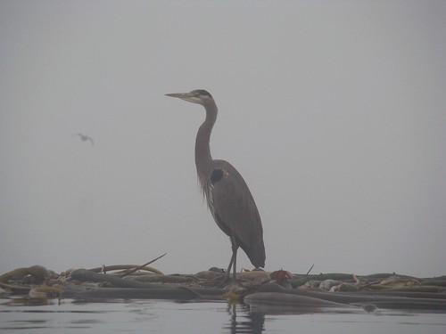 2008-11-30 The Fog 071