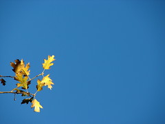 Blue sky with leaf nature background (Brian A Petersen) Tags: blue sky nature beauty leaf with background brian petersen bpbp brianpetersen brianapetersen