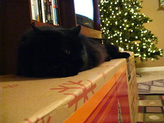 Huggy Bear enjoys the Christmas tree box