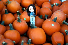Too Many Pumpkins 355/365