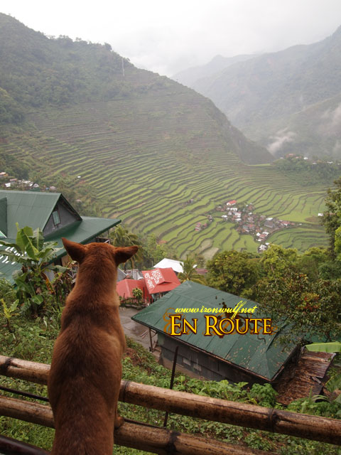 Even a dog could enjoy the view at Batad