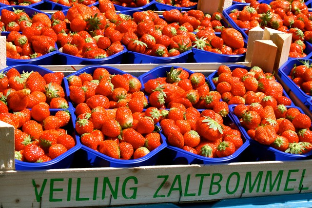 Strawberries at the farmer's market in Holland