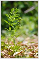 Young forest (Intrudr) Tags: nikon d40 mohanraj nikond40 malayalikkoottam kfm3 malayalikkottamkfm3 expeditiontodewilds mohanrajk mohanrajnet