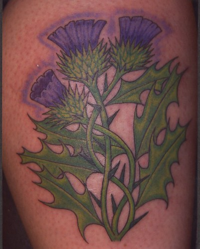 Scottish Thistle Tattoo Ideas: 1000+ Ideas About Scottish Thistle Tattoo On Pinterest