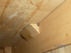 Photos Of Bed Bugs On A Popcorn Ceiling Wall Wooden