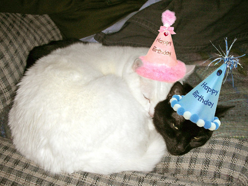 Happy Birthday Kitties!
