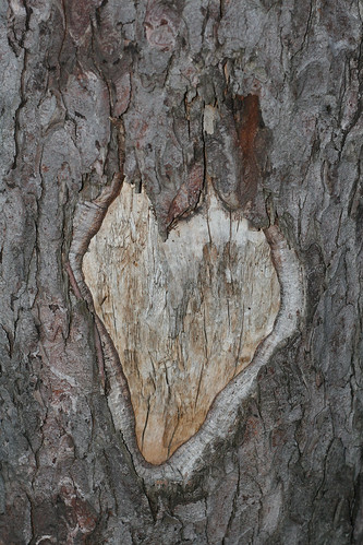 heart of the horse chestnut tree