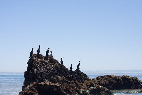 Cormorants at El Matador