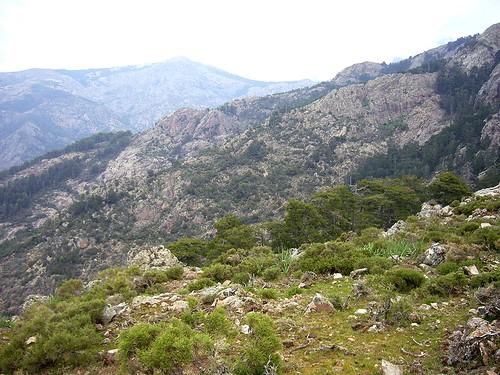 Col 1160 m en versant Sud du ravin de Calanconi