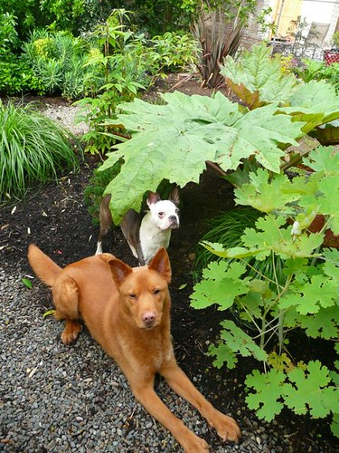 Oscar and Marco under the ornamental rhubarb