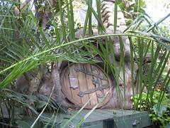 AWITP_June7_08_30.jpg (Adrian J.K. Shum, CGD) Tags: nature winnipeg florafauna muhsashumblogspotcom