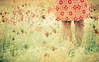 (Benoit.P) Tags: flower fleurs vintage mood dress montréal benoit mtl troisrivieres mauricie tr paille ambiance troisrivières gardela virela2 gardela2 virela3 virela5 virela6 virela7 virela8 virela9 virela10 virela1 benoitp benoitpaille