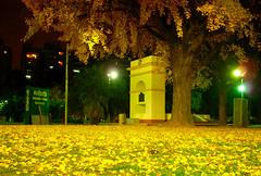 Puse el mundo al revs (Marez Lorena) Tags: autumn light argentina yellow night hojas arbol luces noche nikon amarillo fourseasons otoo luminoso parquerivadavia marezlorena