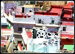 The City of milk cow (sara calani) Tags: cadiz pazzi muuu terrazze alternativi muccato torredelloro ditendenza