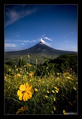 View of Mt. Mayon from Lion Hill (crispyparty) Tags: flower nature yellow volcano lava airport mt aids philippines bluesky adrian mayon geology naturalwonder bicol eruption mtmayon albay lavaflow tecson mayonvolcano legaspicity aplusphoto visiongroup excapture goldstaraward fotocompetition philippinephotographicsociety fotocompetitionbronze lionhill aidstecson adriantecson pcp2011