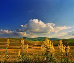 Field flowers (Katarina 2353) Tags: blue autumn sky mountains flower film nature yellow clouds landscape photography nikon europe flickr image serbia paisaje paysage priroda valleys srbija tjkp zlatibor pejza katarinastefanovic katarina2353