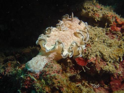 偽裝成麵團的海蛞蝓(1)