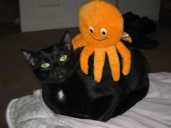 Ozzie Rides Again! (Mr. Ducke) Tags: cat octopus catloaf parsnip ozzie