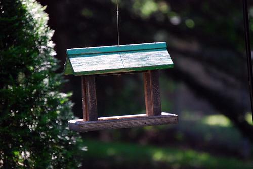 birds birdfeeder