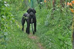 skippy at the gardens 2
