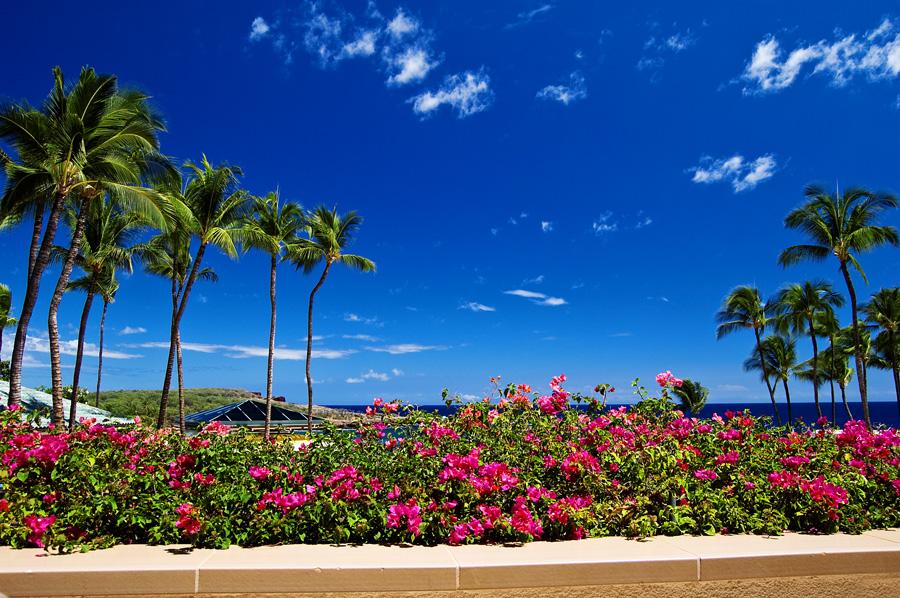 Maui_0339