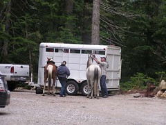 Horses that would pass us on Cady Ridge