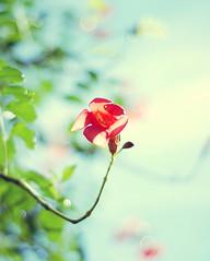 Never bend your head, hold it high. Look the world straight in the eye~ (Tja'Sha) Tags: light sun nature bokeh orangeflower dreams 50mm18 bokehlicous nikond40 babybluesky bokehwhores fiddywhores hbweve bokehtuesdaynight
